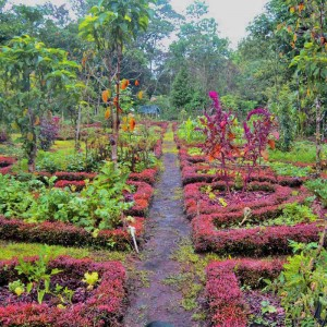 Frank's Beautiful Garden