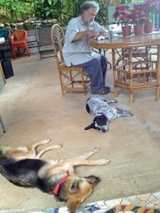 Frank Dog Sitting